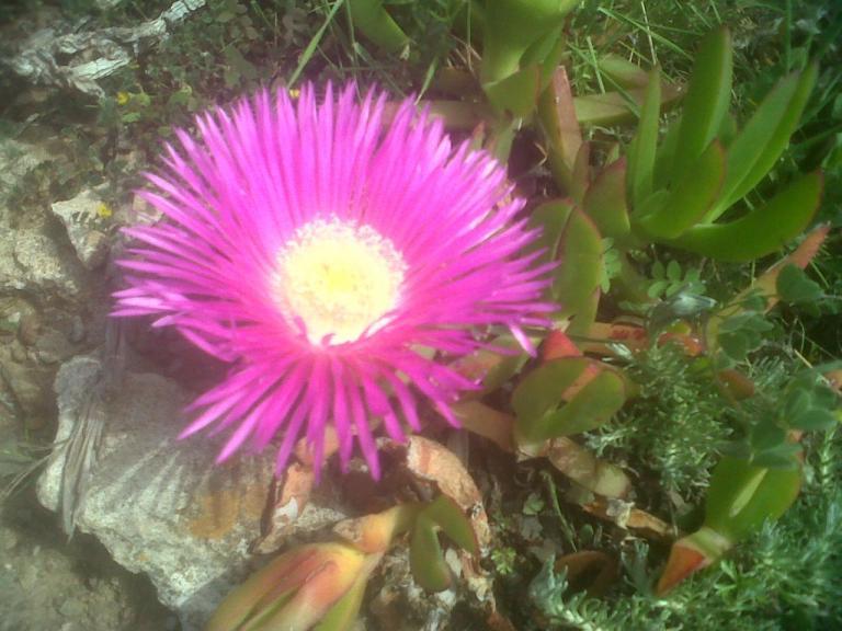 Esprit de la Fleur
