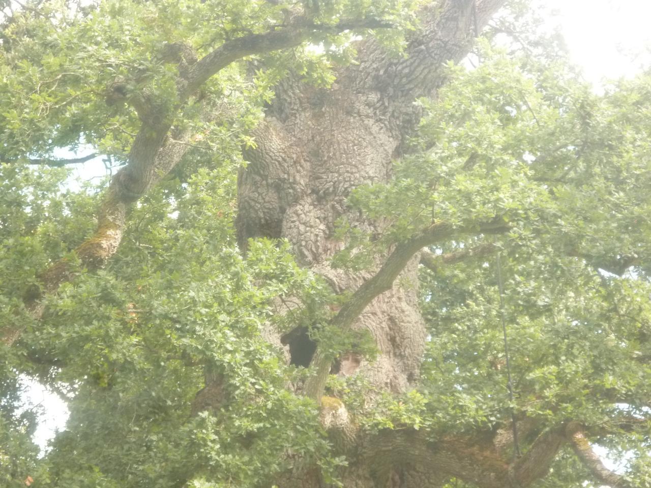 Esprit du Chêne à Guillotin