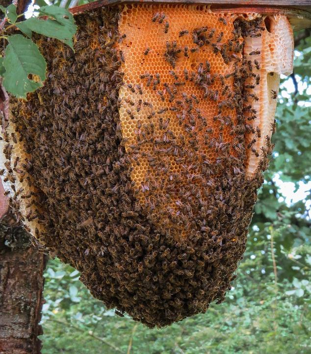 Abeille ruche