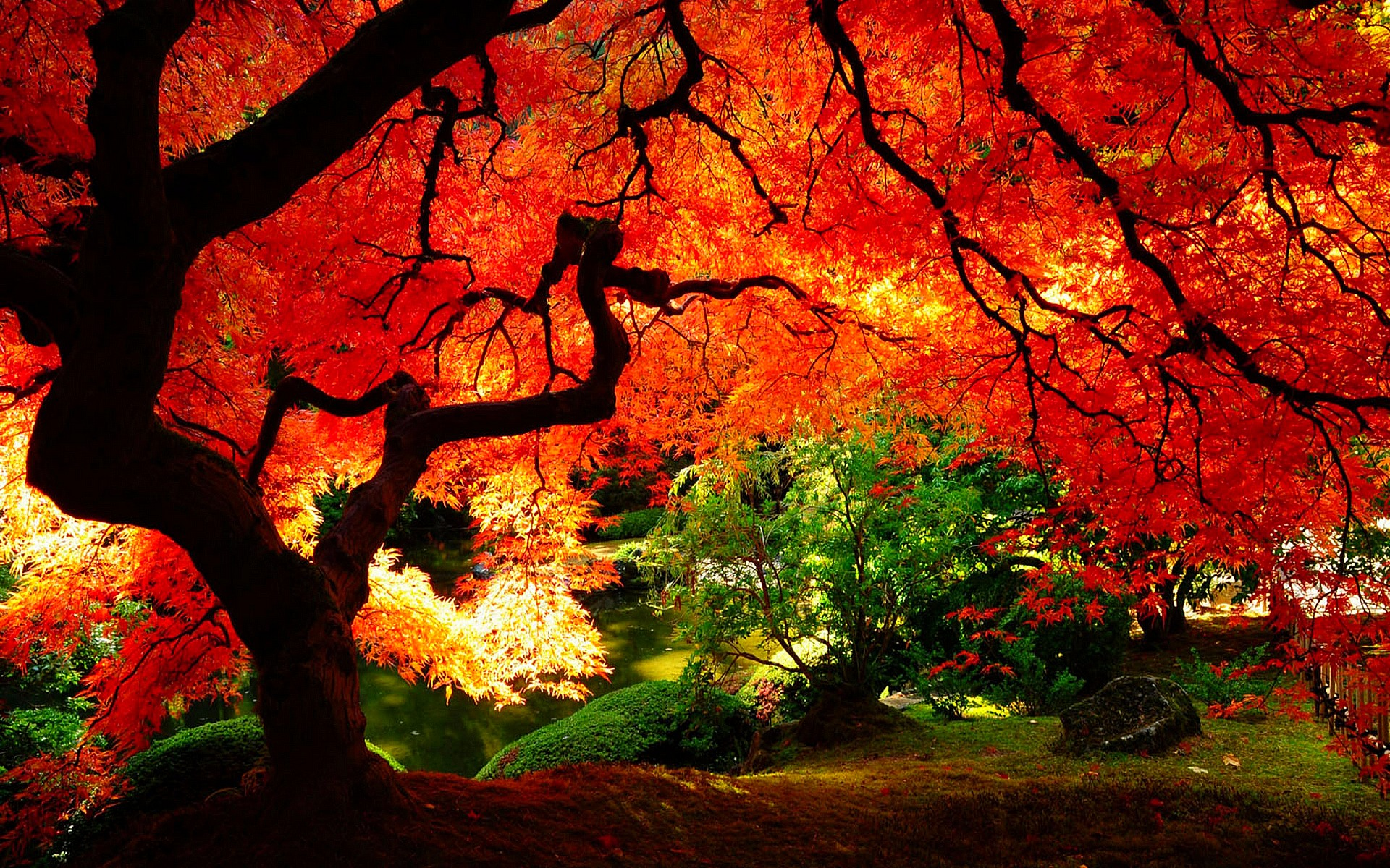 Arbres d automne feuilles rouges sous bois fond ecran