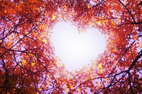 Coeur dans arbre 1
