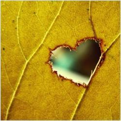 Coeur dans feuille
