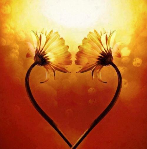 Coeur en fleur jaune 1