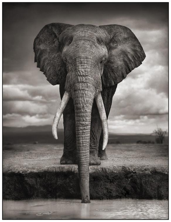 Elephant boit