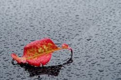Feuille et pluie 1