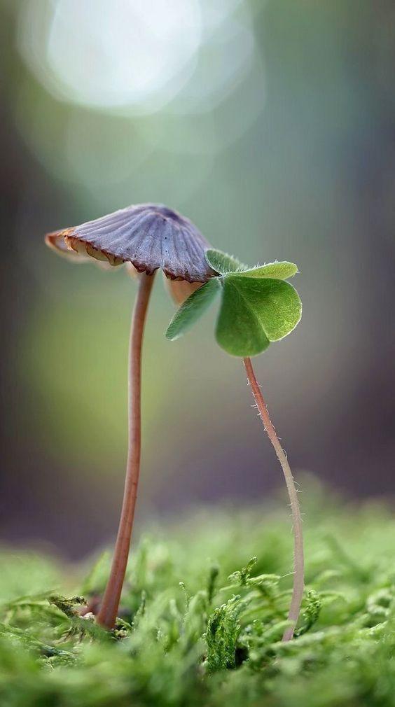Fleur et champignon
