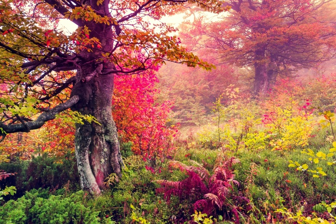 Foret automne