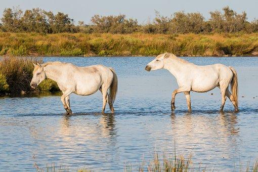 Horses 2591486 340