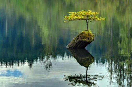 Nature vivante 12