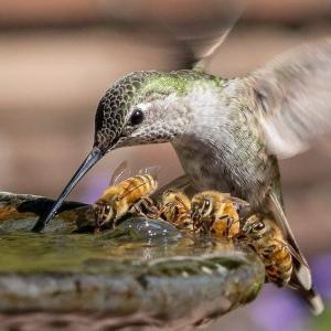 Oiseau abeille