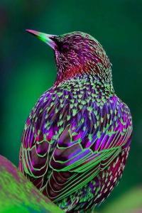 Oiseau colore