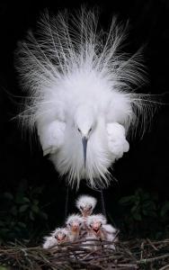 Oiseau et bebe
