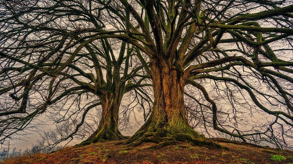 Tree 3097419 960 720